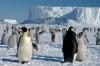 I pinguini imperatore