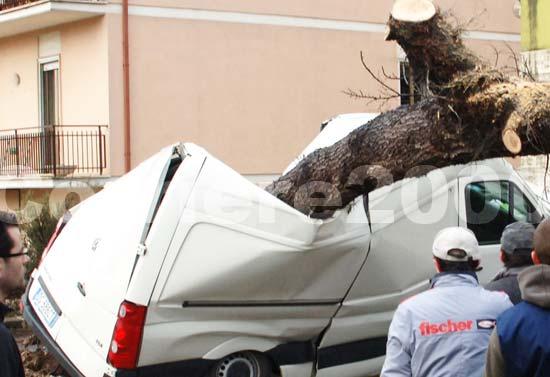 Un albero sfonda un furgone a via Terni