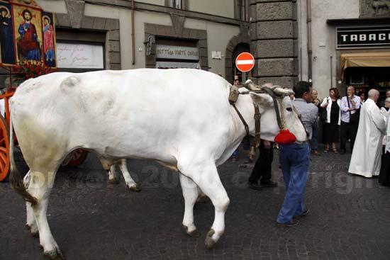 processione_ss_salvatore_20