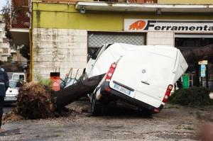 <p>Albero crollato su camion</p>