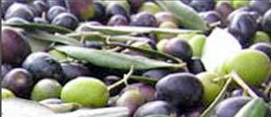 <br /> olive